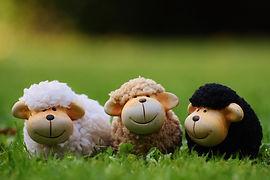sheep-1642874_1280.jpg