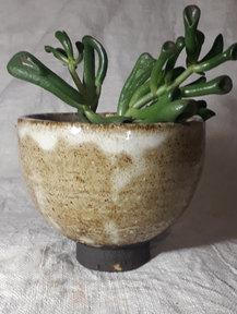 Mini pot, Crassula Gollum