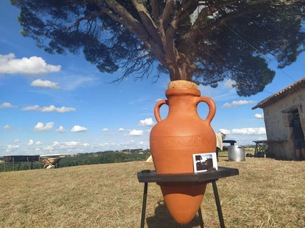 Amphora - continuation and end