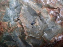 Spider trompe l'oeil