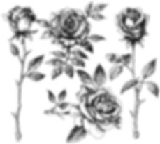 Dibujo Principiantes - Rosa.png