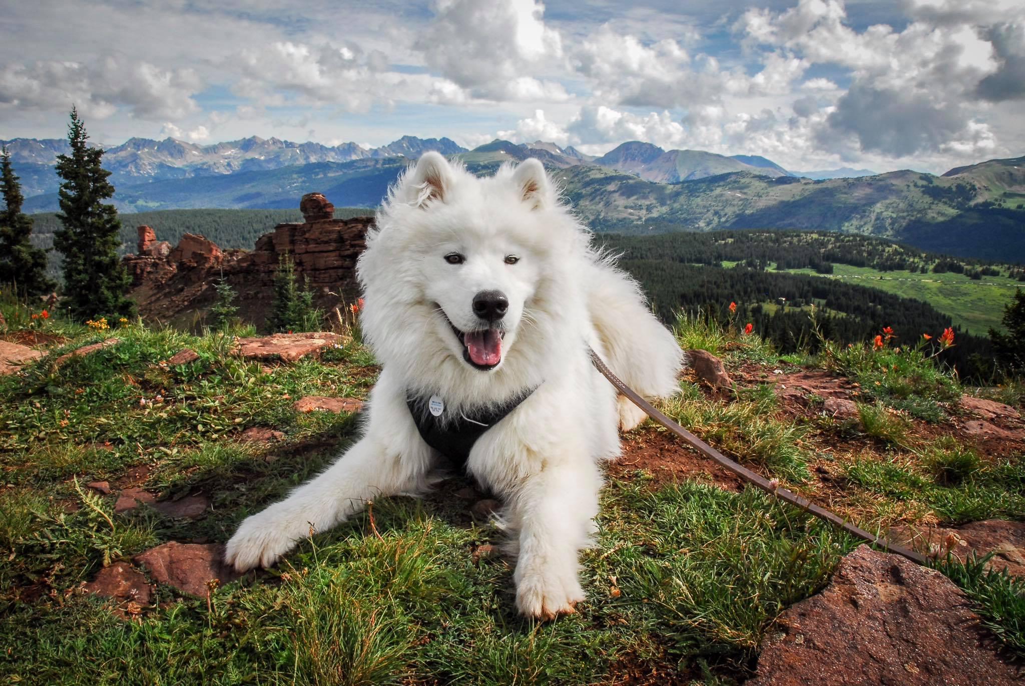 Puppy and Colorado Mountains