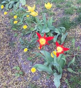 Blomma röd- gul_redigerad.jpg