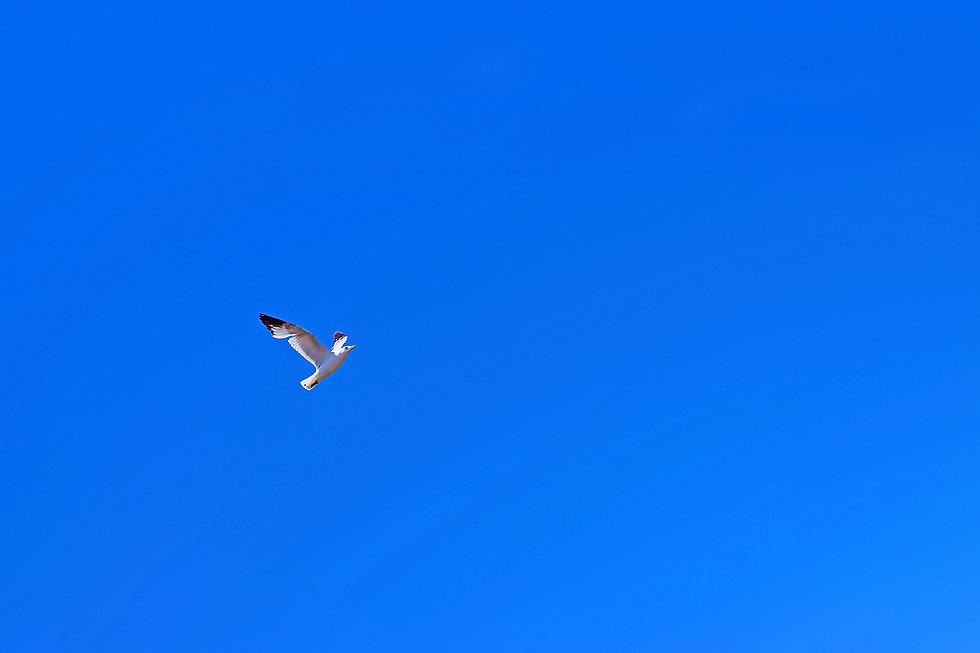 birds of seagull.jpg