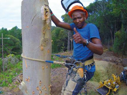 SPECIALISED TREE FELLING
