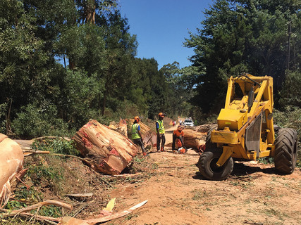 LAND CLEARING AND  ALIEN HARVESTING