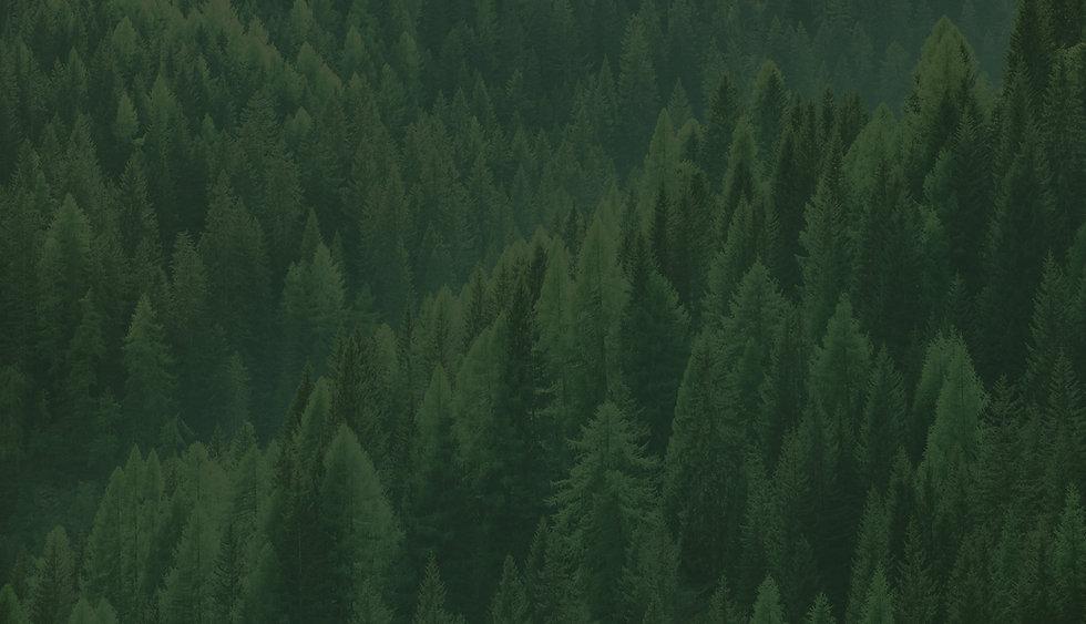home_treepro_11-05.jpg