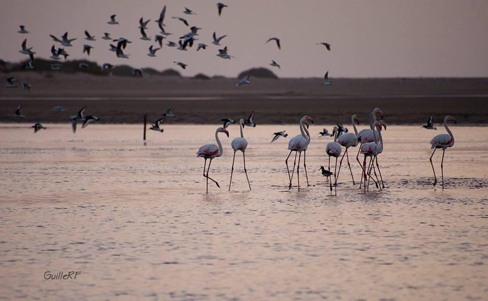 Safari Atlantique Maroc