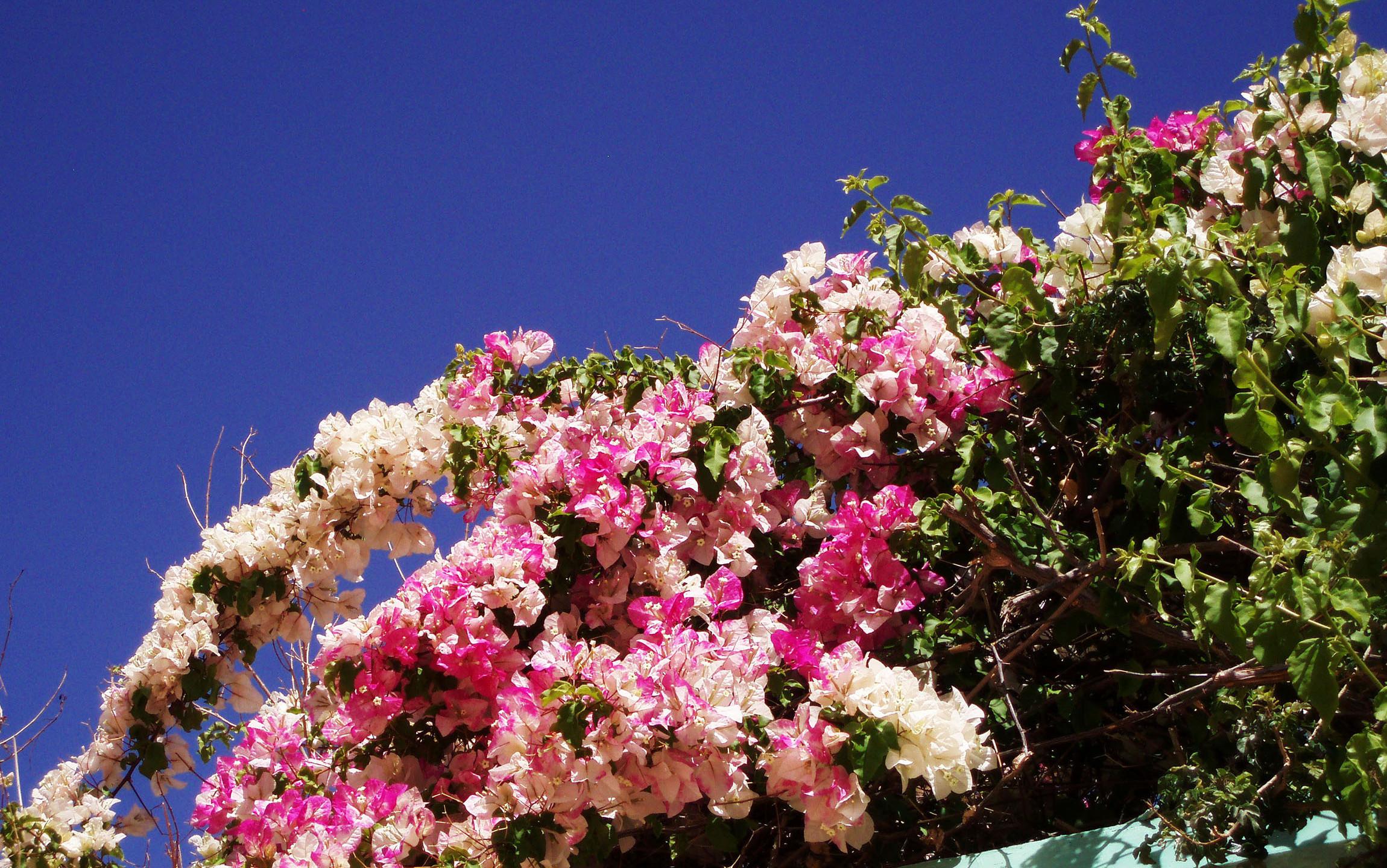 Fleurs & senteurs