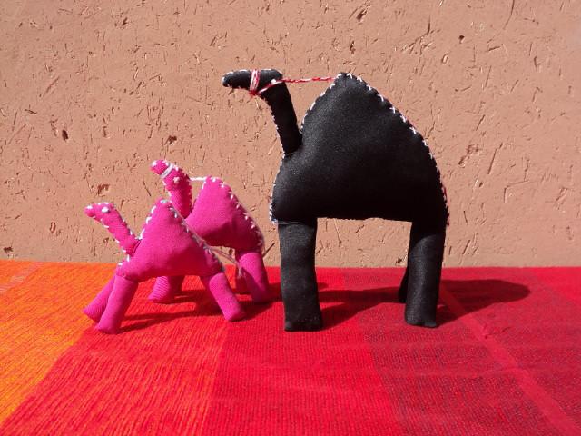 Dromadaires du Maroc - Coopérative Beija