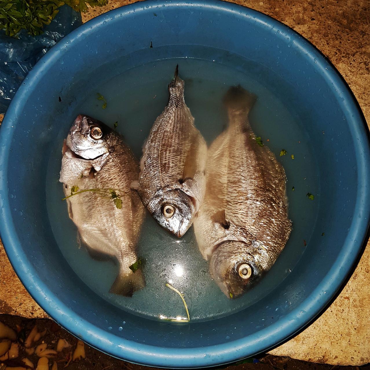 Etape 2 - le poisson