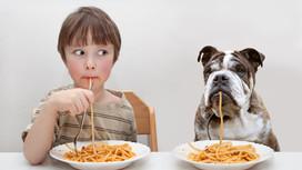 ¿Qué NO pueden comer mis perros?