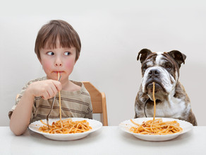 A Diet For Your Dog?