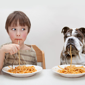 Nutrition Guidelines for dogs   Part 1
