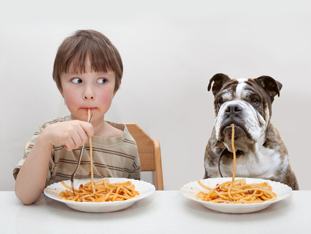 How Poor Nutrition Can Shorten the Lifespan of Your Pet: (And What You Can Do About It)