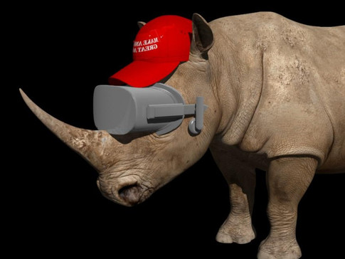 Don and Rhinos
