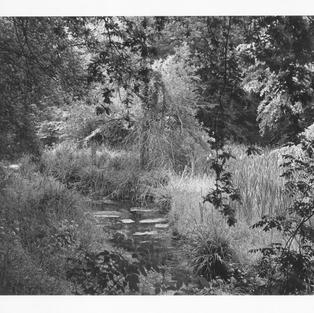 Visión fugitiva desde el puente de Deva, Gijón (Arboles, ramas y hojas # 1. 1981