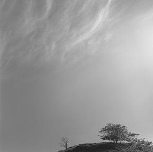Nubes y árboles. Amieva 1999