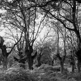 Treemonisha. Carbayera de El Tragamón, Gijón. 1983