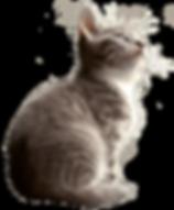 Gato cachoro sentado (1).png