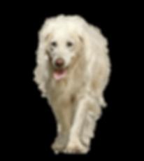 dog-3234281 (2).png
