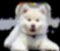 perro cachorro.png