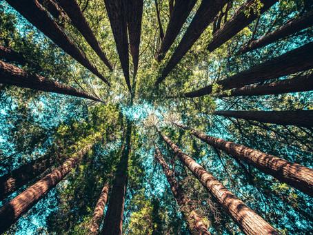 Naar buiten: goed voor jezelf en je werk
