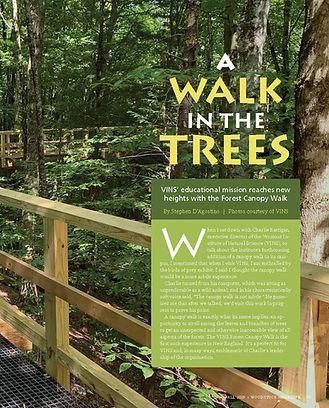 A Walk in the Trees.jpg
