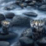 pearls_1.jpg