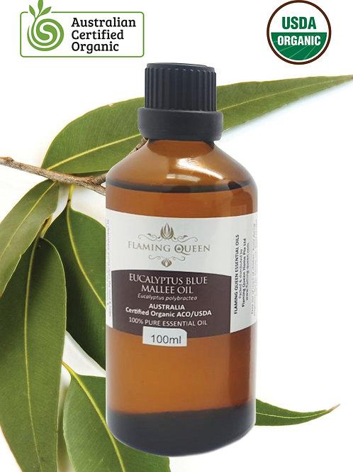 Flaming Queen Essential Oil - Eucalyptus Certified Organic 100ML (Australia)