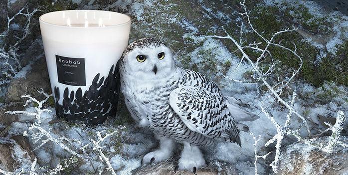 feathers_owl.jpg