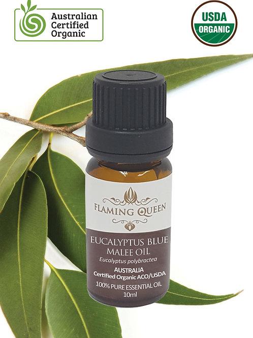 Flaming Queen Essential Oil - Eucalyptus Certified Organic 10ML (Australia)