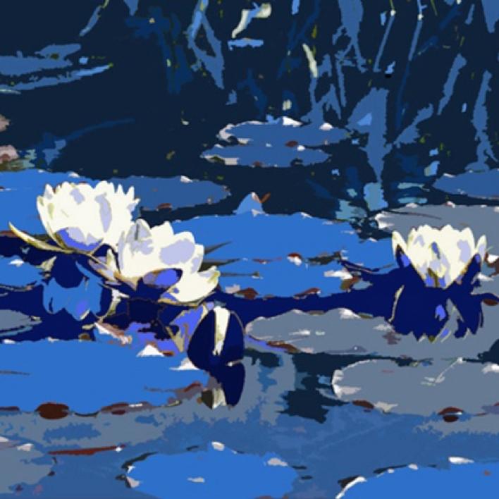 Nymphéas aux fleurs blanches