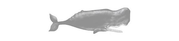website-header---whale.png