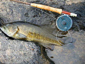 Smallmouth bass 1.jpg