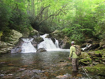 Backcountry wild Southern Appalachian Brook Trout Stream
