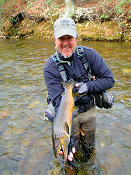 Davidson River Brown Trout - 25 inch trout on size 24 midge fly!