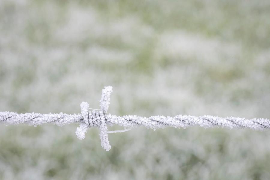 17 frosty wire.jpg