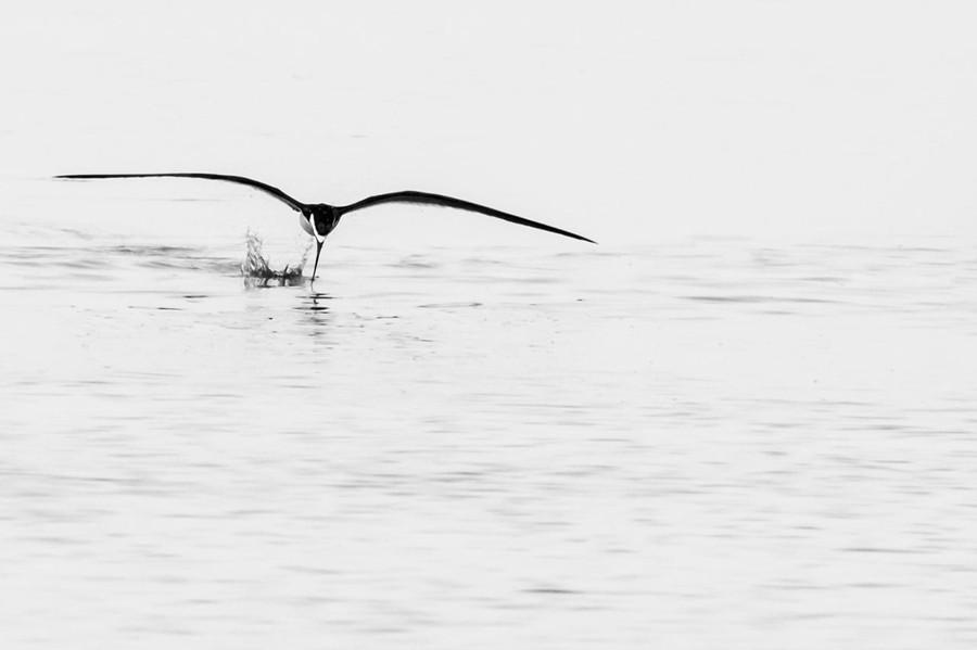 14 Bird fishing.jpg