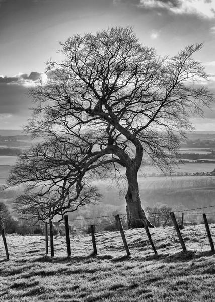 32 Lone Tree.jpg