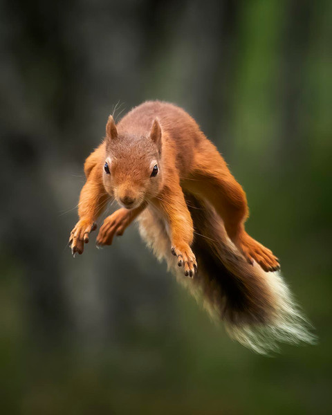 23 Flying Leap.jpg