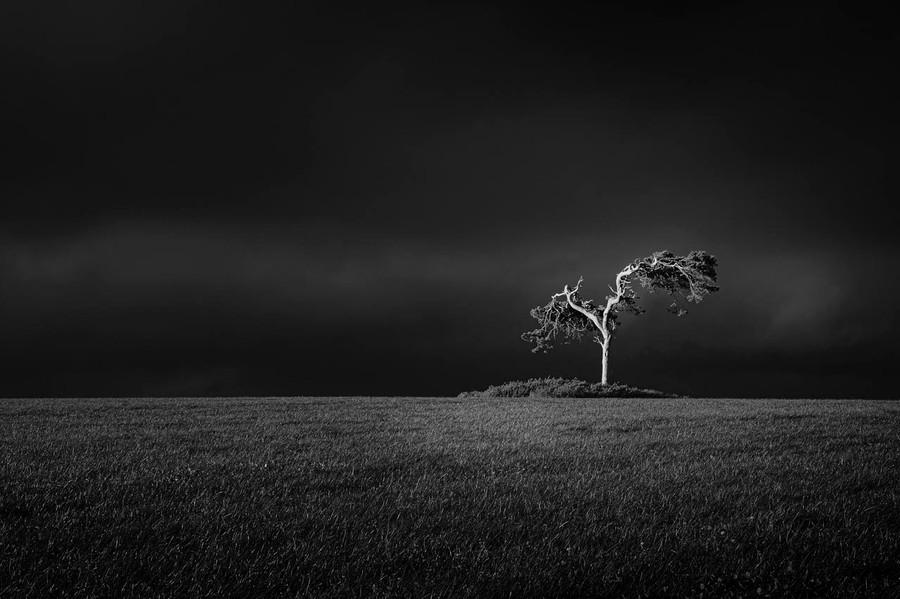 31 fairy tree.jpg