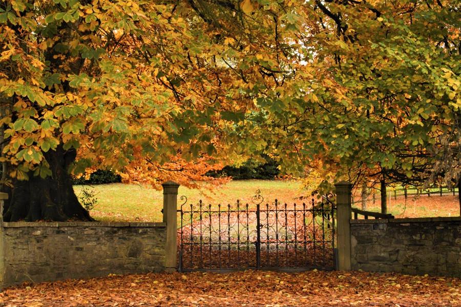 20 AutumnGate.jpg