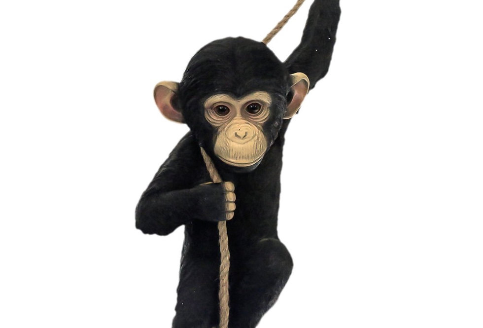 Monkey the Chimp