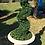 Thumbnail: Topiary Spiral tree