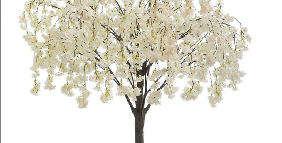 Dropping Blossom Tree