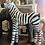 Thumbnail: Ziggy The Zebra