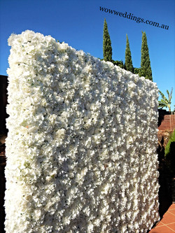 Flower wall 2.65 by 2.5 m