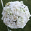 Thumbnail: 30 cm Rose/Hydrangea Kissing Ball  real touch