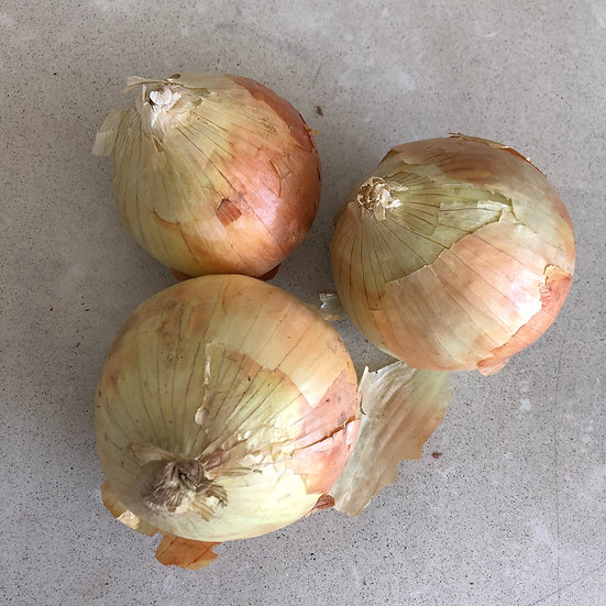 Onion, Yellow